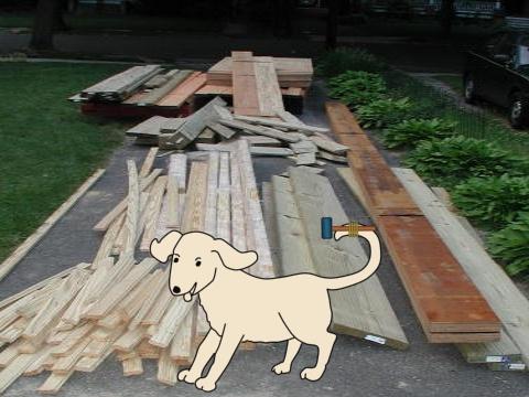 DogTail.jpg