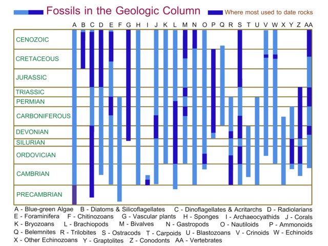 fossils and the geologic column essay Explain how using the order of fossils in the geologic column to support evolution is an example of circular reasoning uniformity the principle of _________ states that the same scientific laws in operation today have existed throughout the earth's history.