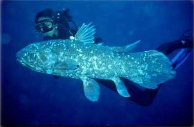 coelacanth.jpg