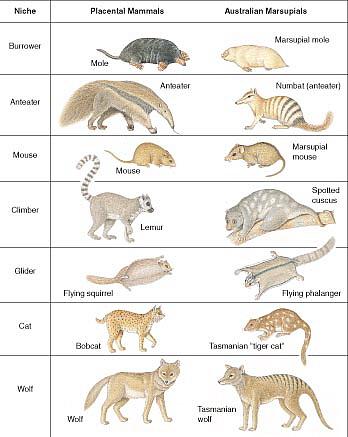 Evole Cat Food
